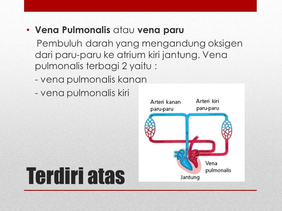 Terdiri atas Vena Pulmonalis atau vena paru