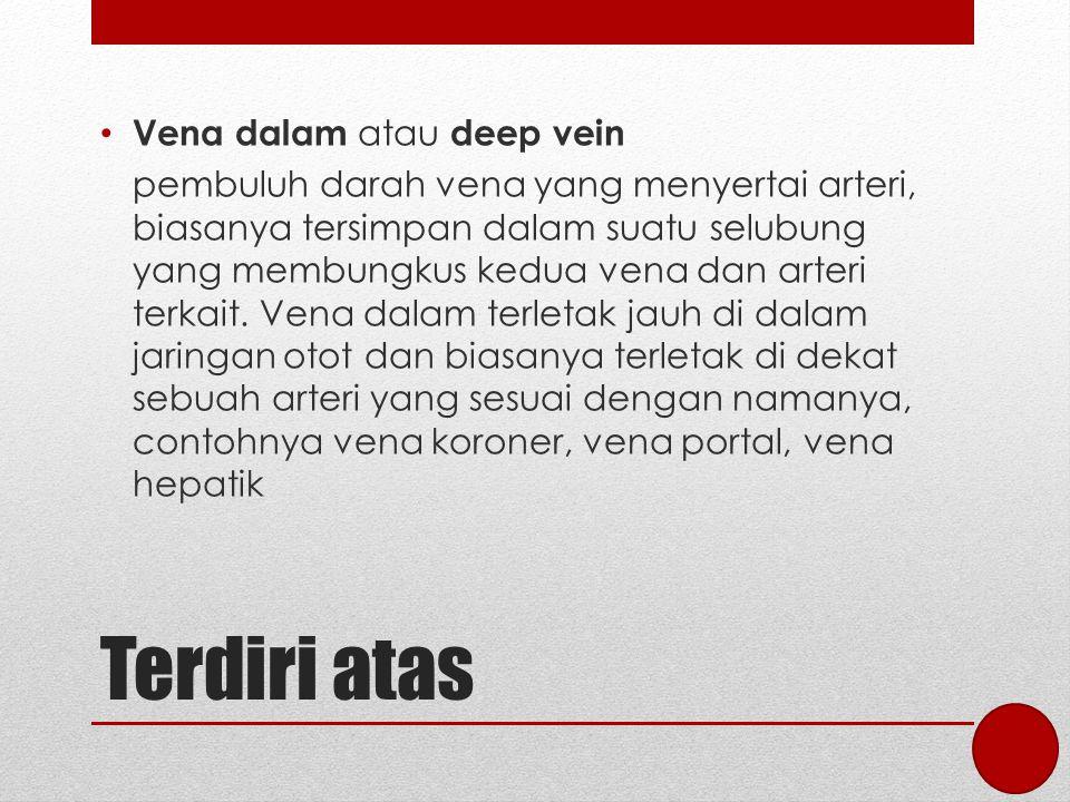 Terdiri atas Vena dalam atau deep vein