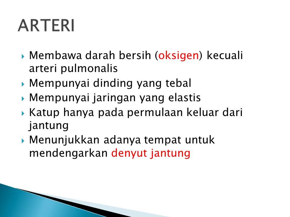 ARTERI Membawa darah bersih (oksigen) kecuali arteri pulmonalis