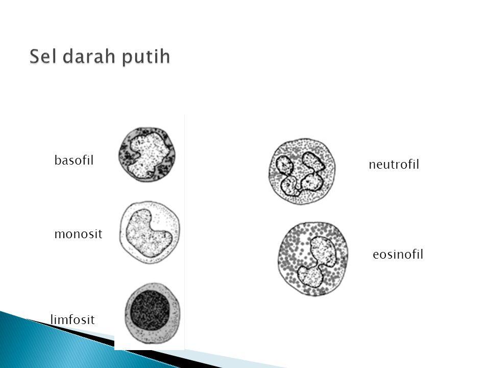 Sel darah putih basofil neutrofil monosit eosinofil limfosit