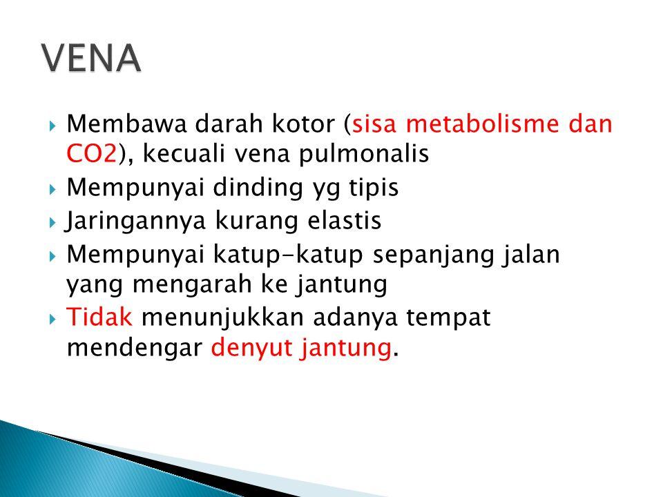 VENA Membawa darah kotor (sisa metabolisme dan CO2), kecuali vena pulmonalis. Mempunyai dinding yg tipis.