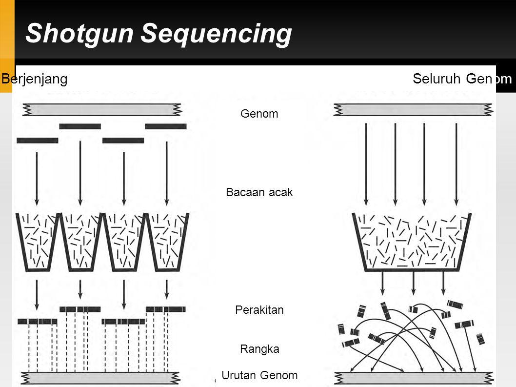 Berjenjang Seluruh Genom