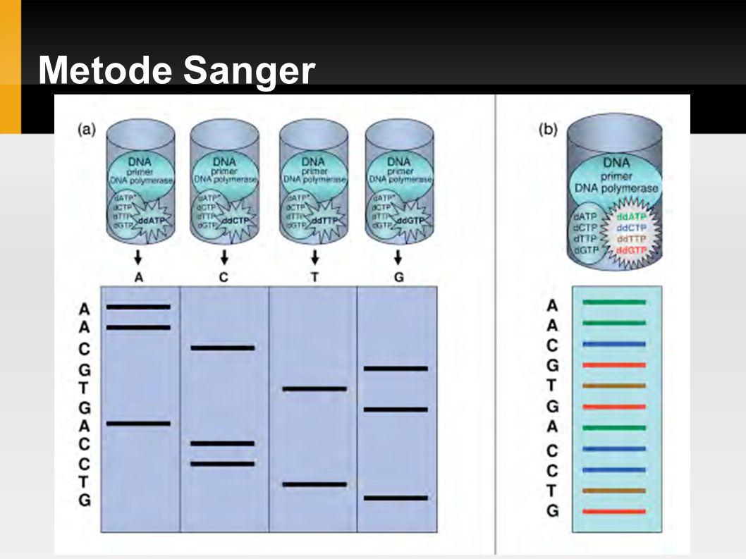 Metode Sanger