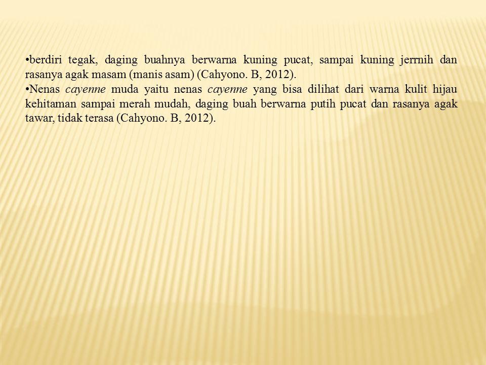 berdiri tegak, daging buahnya berwarna kuning pucat, sampai kuning jerrnih dan rasanya agak masam (manis asam) (Cahyono. B, 2012).