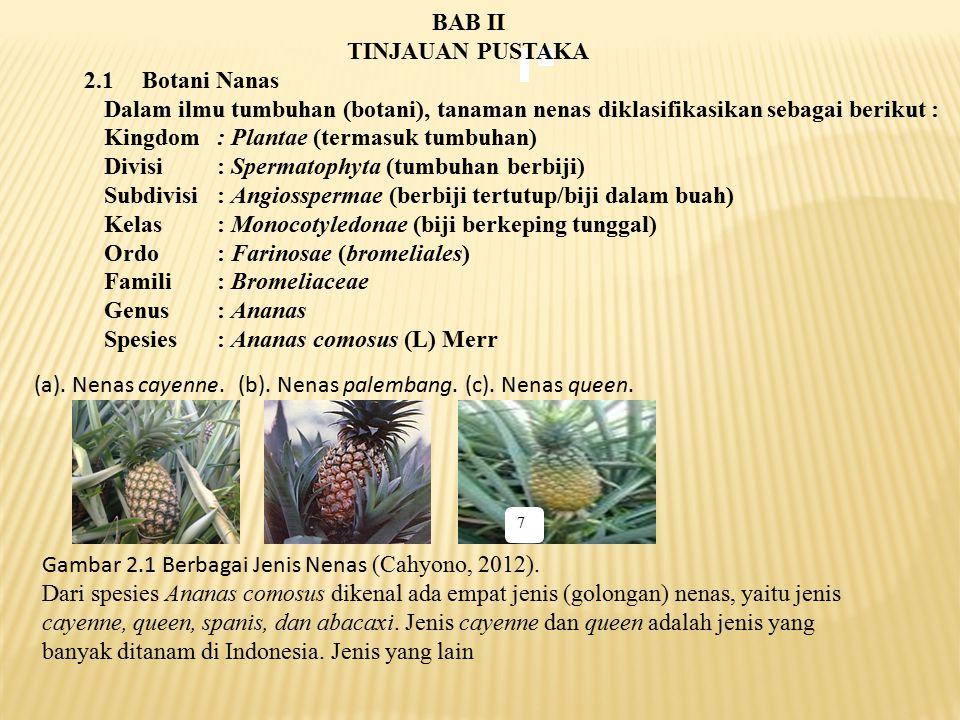 Kingdom : Plantae (termasuk tumbuhan)