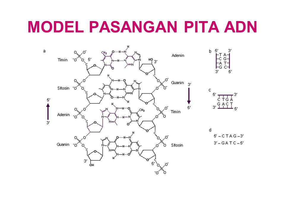 MODEL PASANGAN PITA ADN