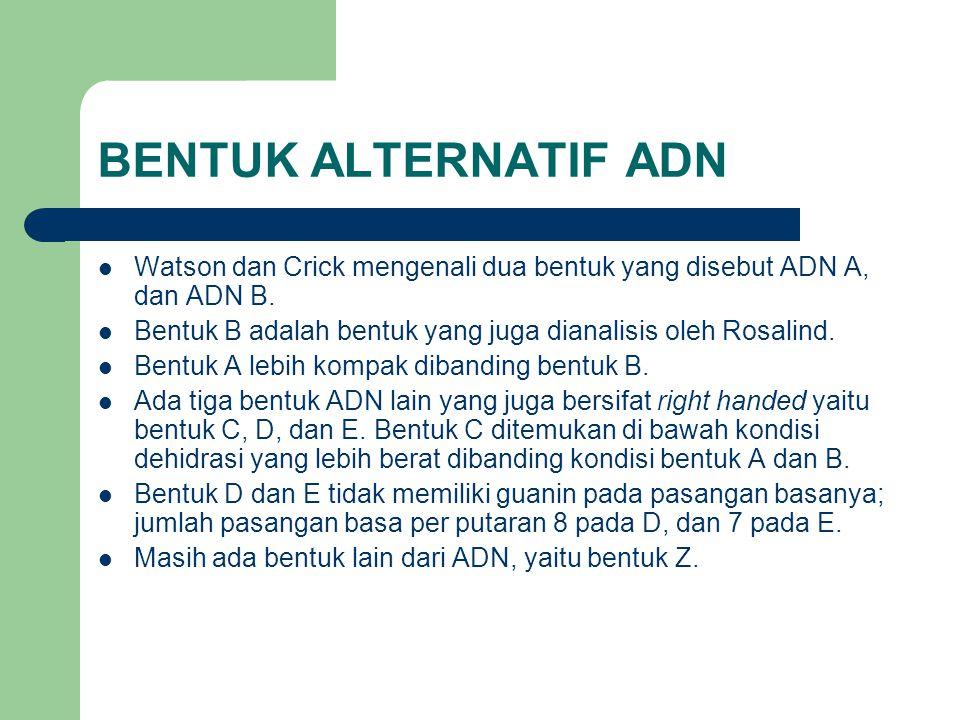 BENTUK ALTERNATIF ADN Watson dan Crick mengenali dua bentuk yang disebut ADN A, dan ADN B.