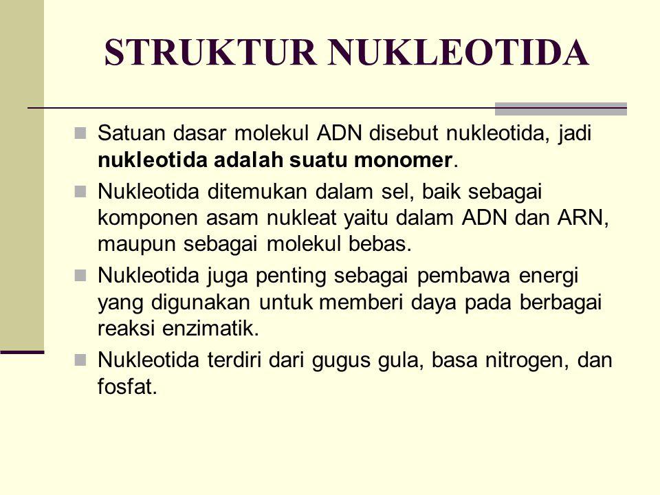 STRUKTUR NUKLEOTIDA Satuan dasar molekul ADN disebut nukleotida, jadi nukleotida adalah suatu monomer.