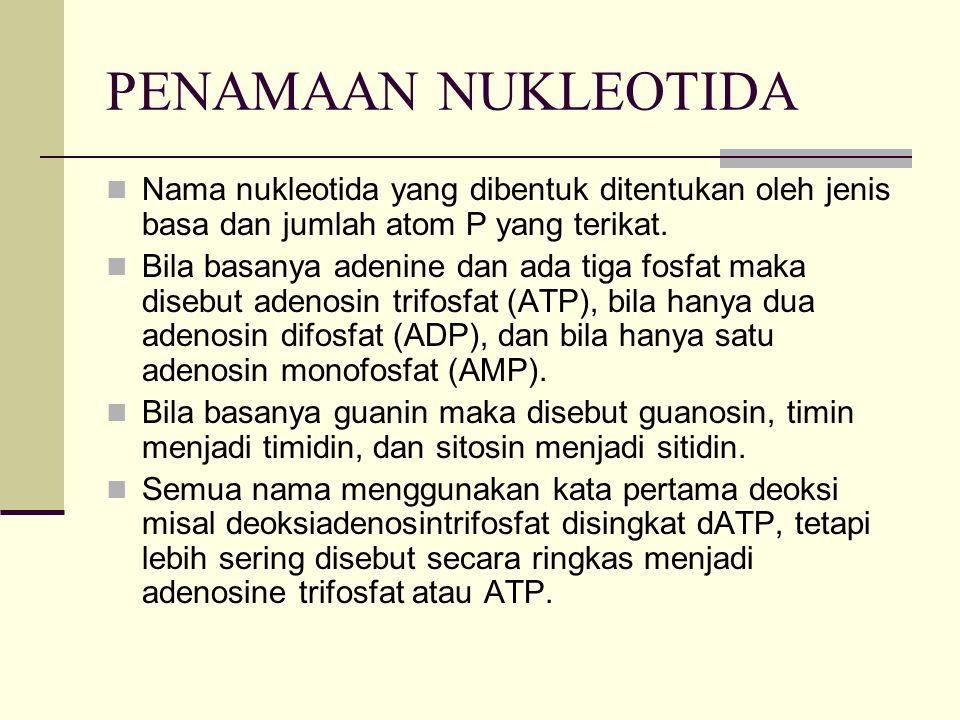 PENAMAAN NUKLEOTIDA Nama nukleotida yang dibentuk ditentukan oleh jenis basa dan jumlah atom P yang terikat.