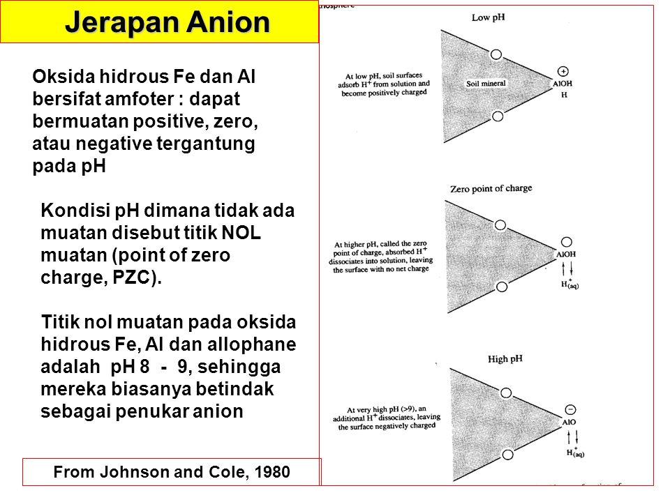 Jerapan Anion Oksida hidrous Fe dan Al bersifat amfoter : dapat bermuatan positive, zero, atau negative tergantung pada pH.