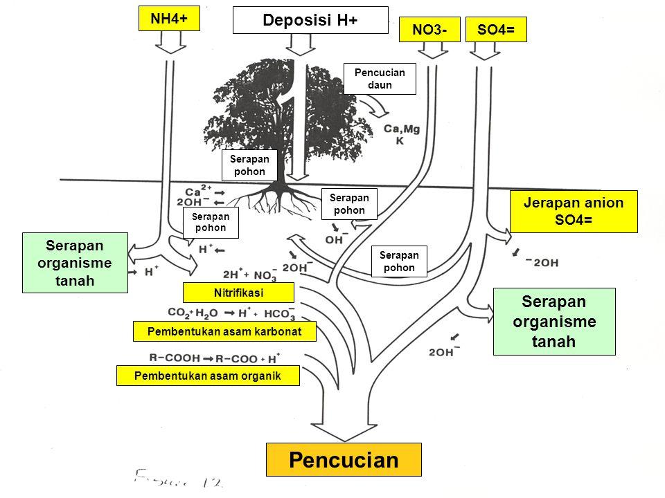 Pencucian Deposisi H+ Serapan organisme tanah NH4+ NO3- SO4=