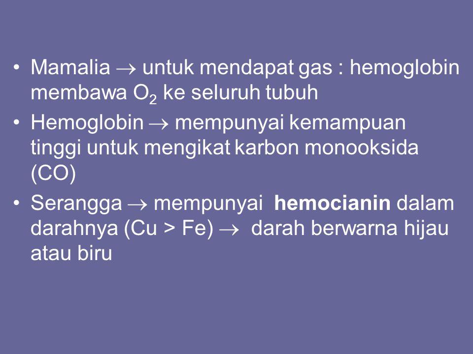 Mamalia  untuk mendapat gas : hemoglobin membawa O2 ke seluruh tubuh