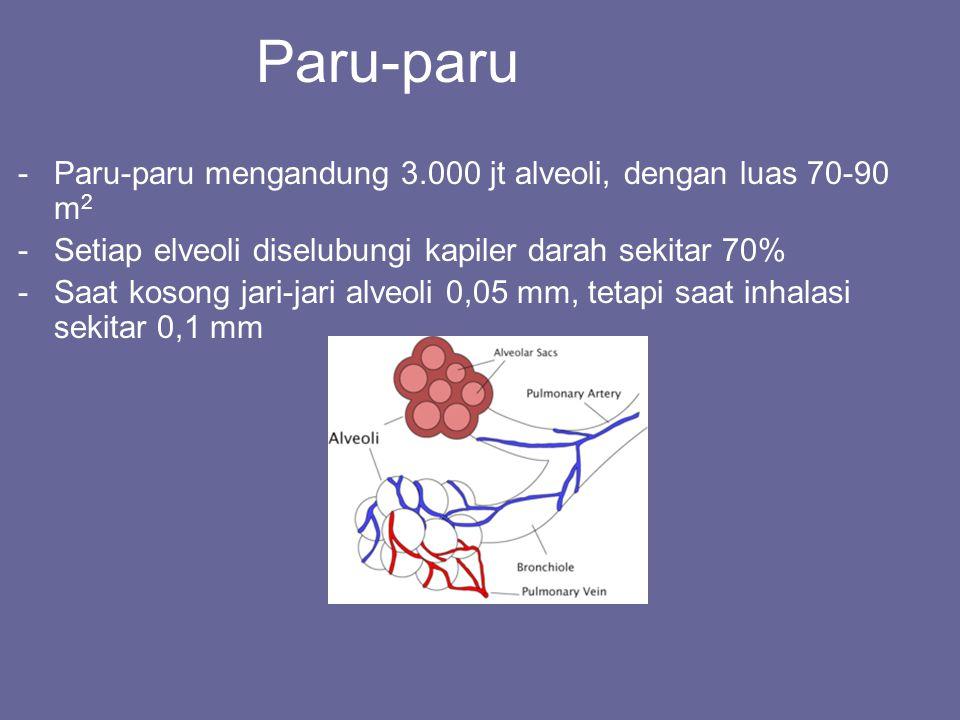Paru-paru Paru-paru mengandung 3.000 jt alveoli, dengan luas 70-90 m2