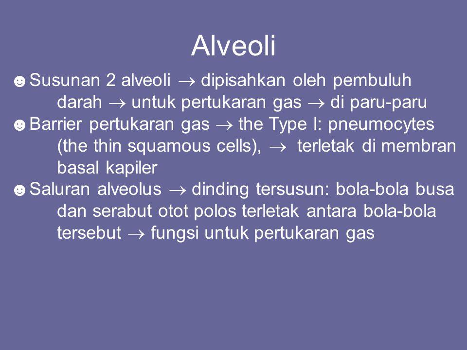 Alveoli ☻Susunan 2 alveoli  dipisahkan oleh pembuluh darah  untuk pertukaran gas  di paru-paru.