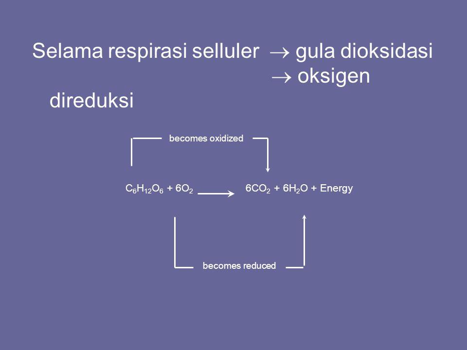 Selama respirasi selluler  gula dioksidasi  oksigen direduksi