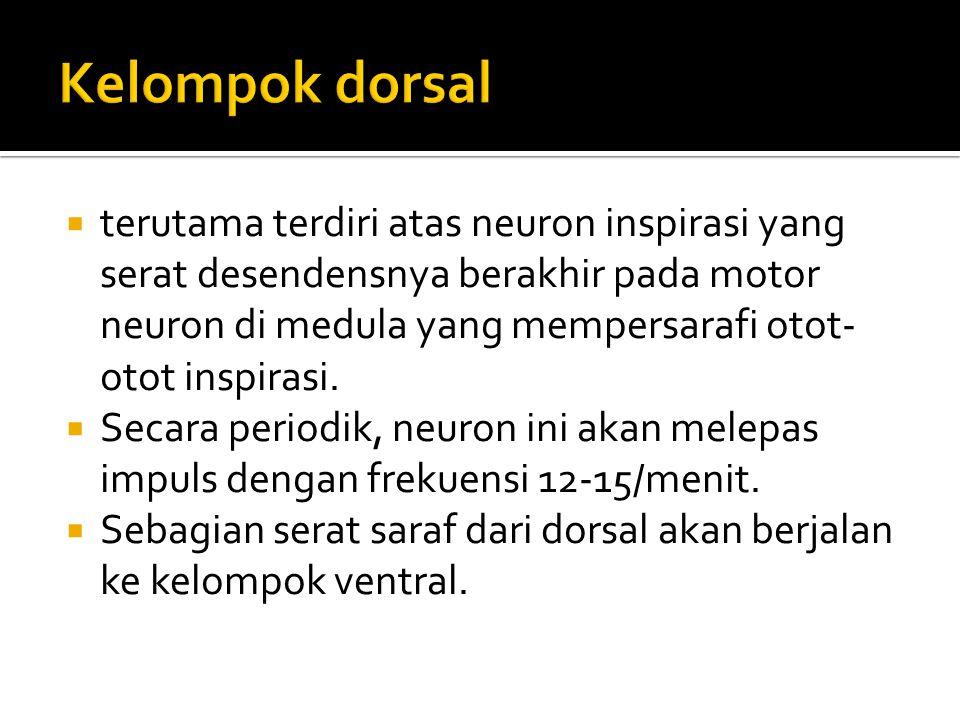 Kelompok dorsal