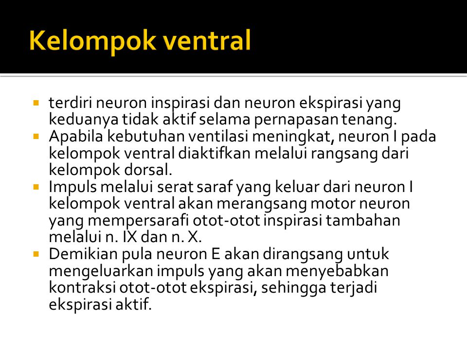Kelompok ventral terdiri neuron inspirasi dan neuron ekspirasi yang keduanya tidak aktif selama pernapasan tenang.