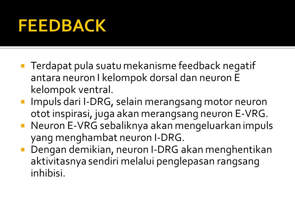FEEDBACK Terdapat pula suatu mekanisme feedback negatif antara neuron I kelompok dorsal dan neuron E kelompok ventral.