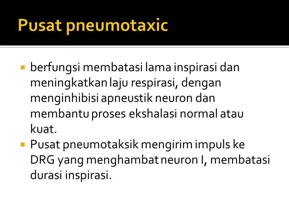 Pusat pneumotaxic