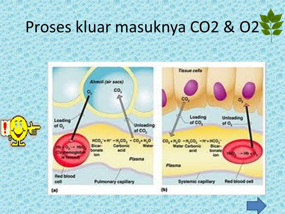 Proses kluar masuknya CO2 & O2