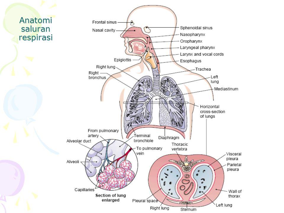 Anatomi saluran respirasi