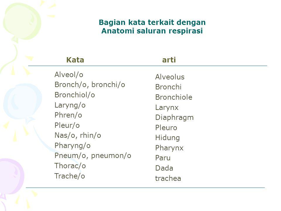 Bagian kata terkait dengan Anatomi saluran respirasi
