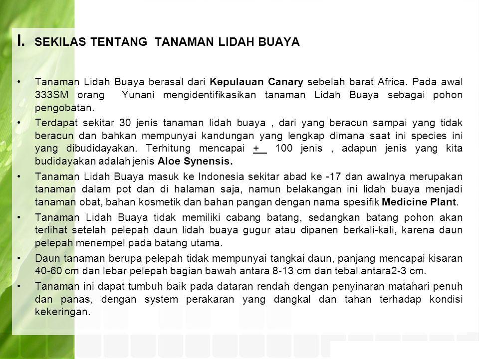 I. SEKILAS TENTANG TANAMAN LIDAH BUAYA