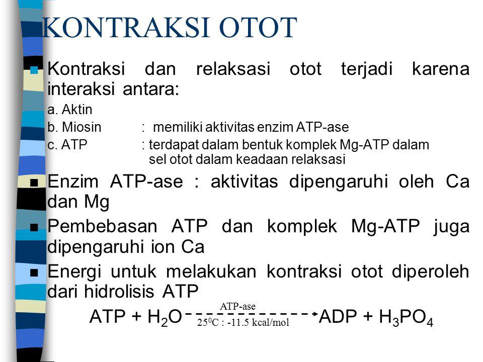 KONTRAKSI OTOT Kontraksi dan relaksasi otot terjadi karena interaksi antara: a. Aktin. b. Miosin : memiliki aktivitas enzim ATP-ase.