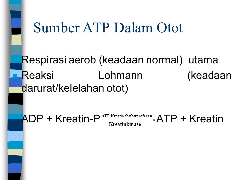 ATP-Kreatin-fosfotransferase