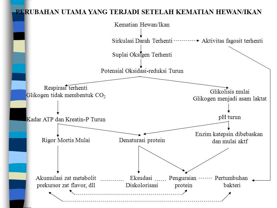 PERUBAHAN UTAMA YANG TERJADI SETELAH KEMATIAN HEWAN/IKAN