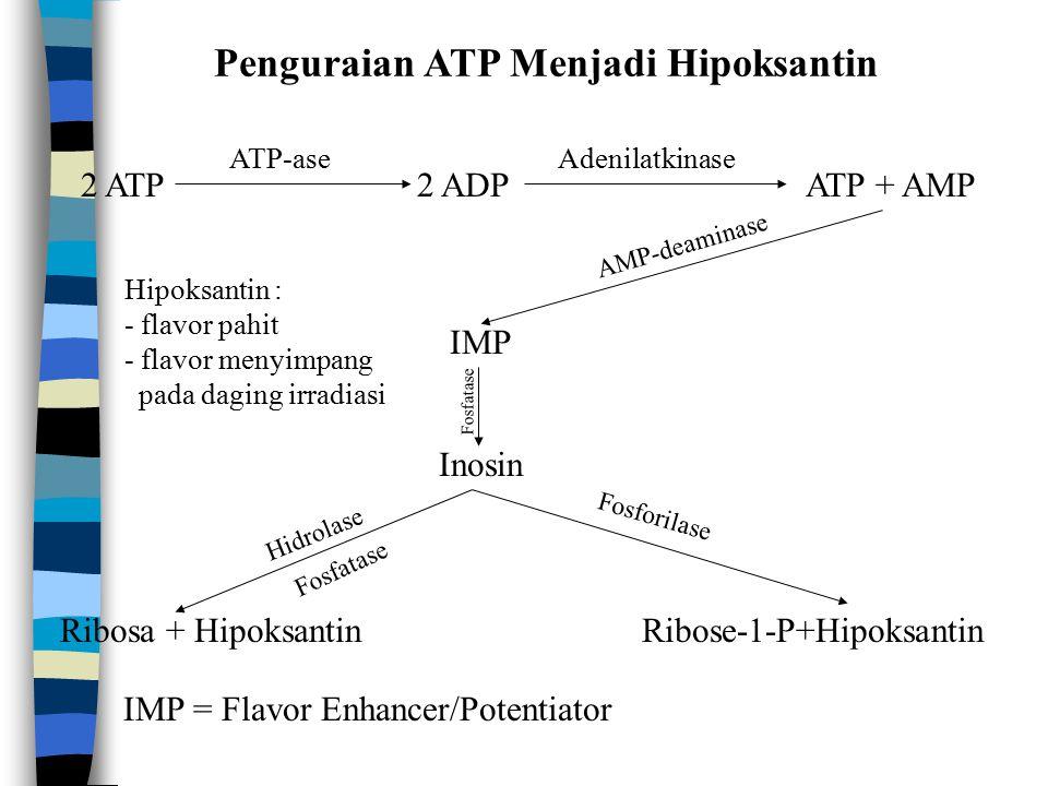 Penguraian ATP Menjadi Hipoksantin