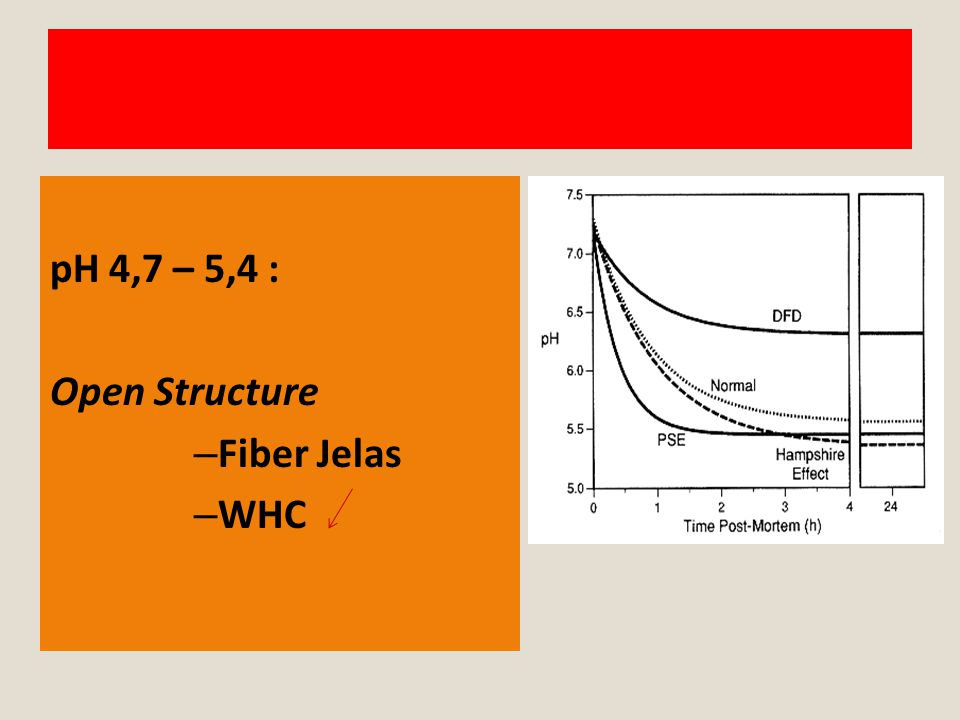 pH 4,7 – 5,4 : Open Structure Fiber Jelas WHC