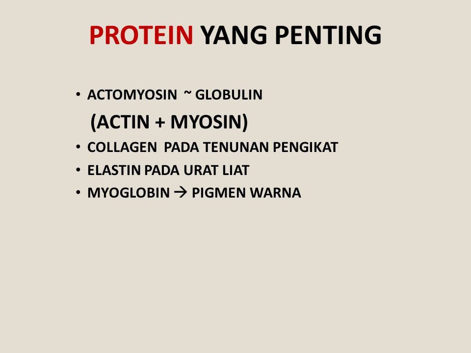 PROTEIN YANG PENTING (ACTIN + MYOSIN) ACTOMYOSIN ~ GLOBULIN