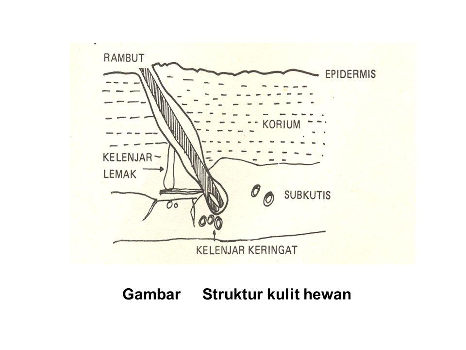 Gambar Struktur kulit hewan