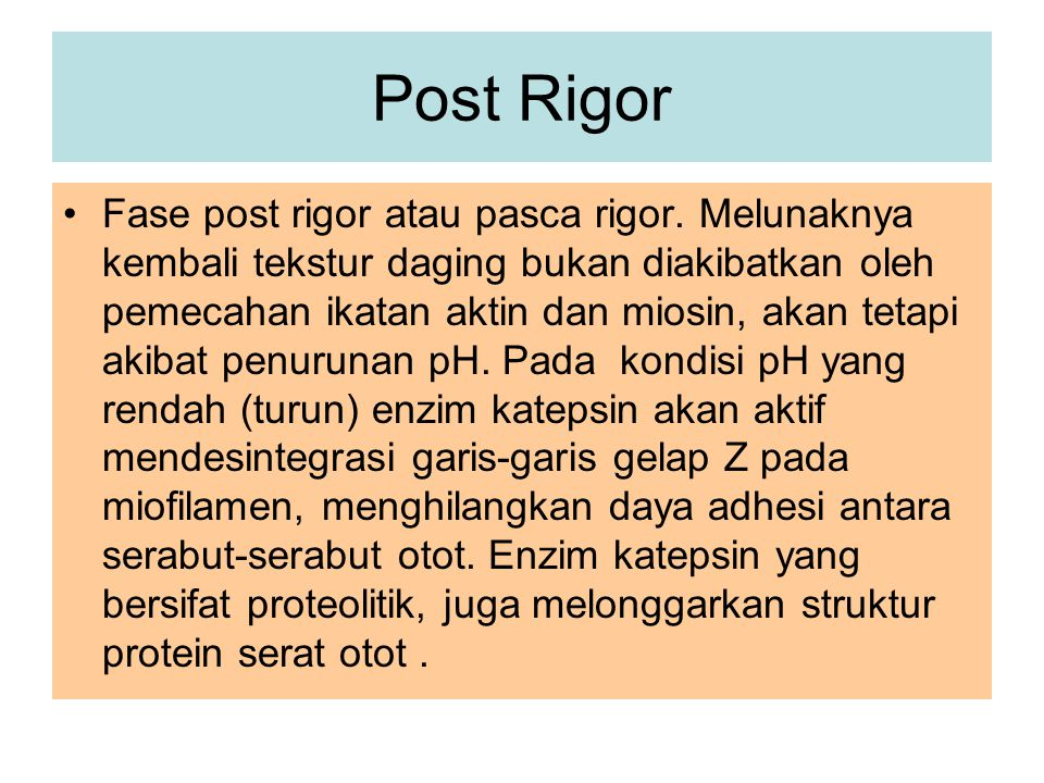 Post Rigor