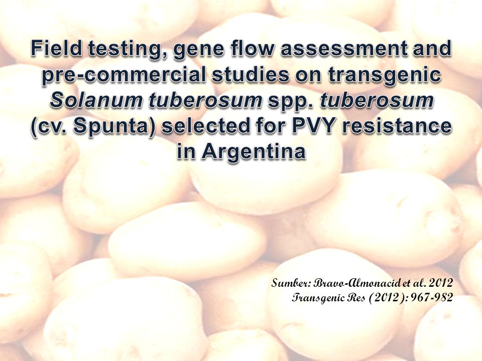 (cv. Spunta) selected for PVY resistance in Argentina