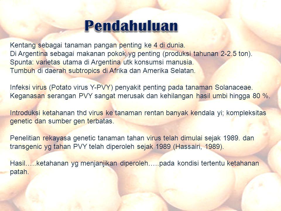 Pendahuluan Kentang sebagai tanaman pangan penting ke 4 di dunia.