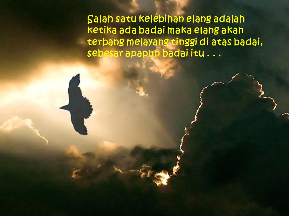 Salah satu kelebihan elang adalah ketika ada badai maka elang akan terbang melayang tinggi di atas badai, sebesar apapun badai itu .