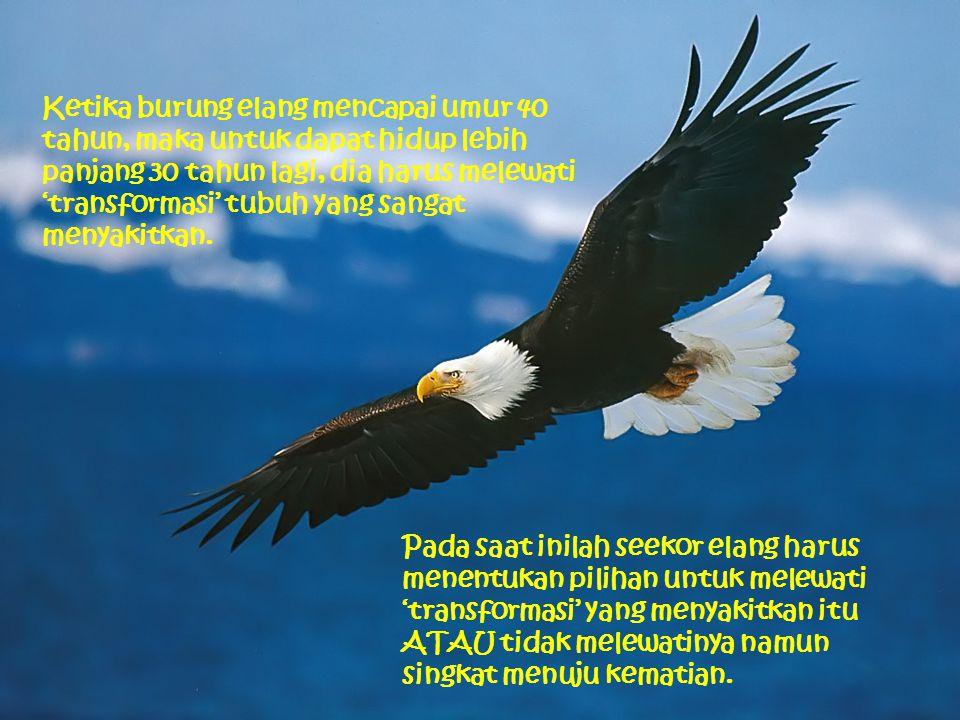 Ketika burung elang mencapai umur 40 tahun, maka untuk dapat hidup lebih panjang 30 tahun lagi, dia harus melewati 'transformasi' tubuh yang sangat menyakitkan.