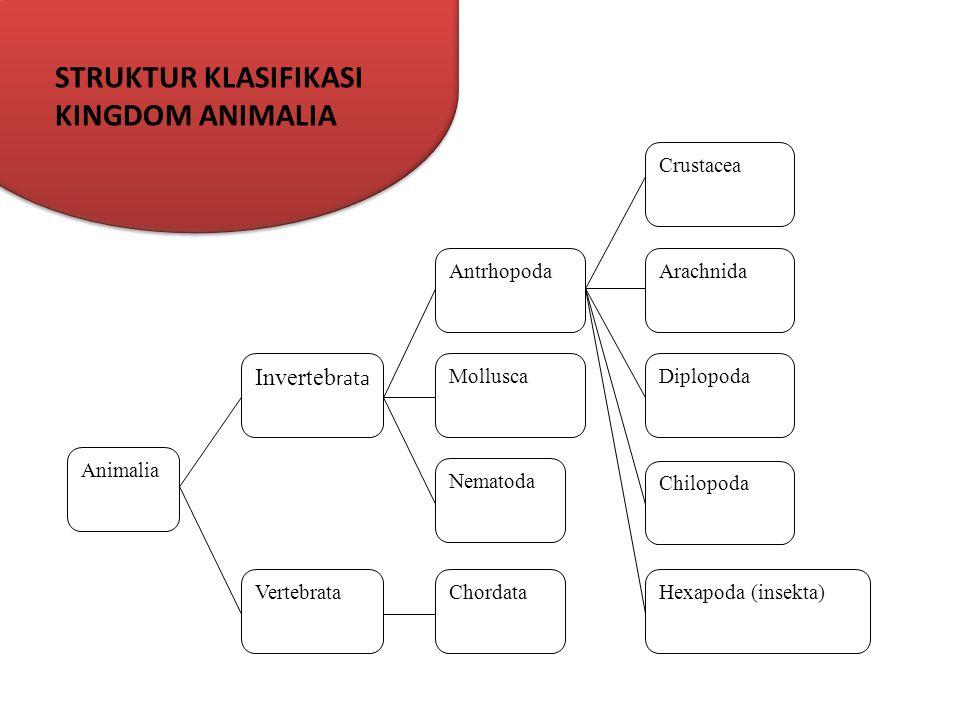 STRUKTUR KLASIFIKASI KINGDOM ANIMALIA