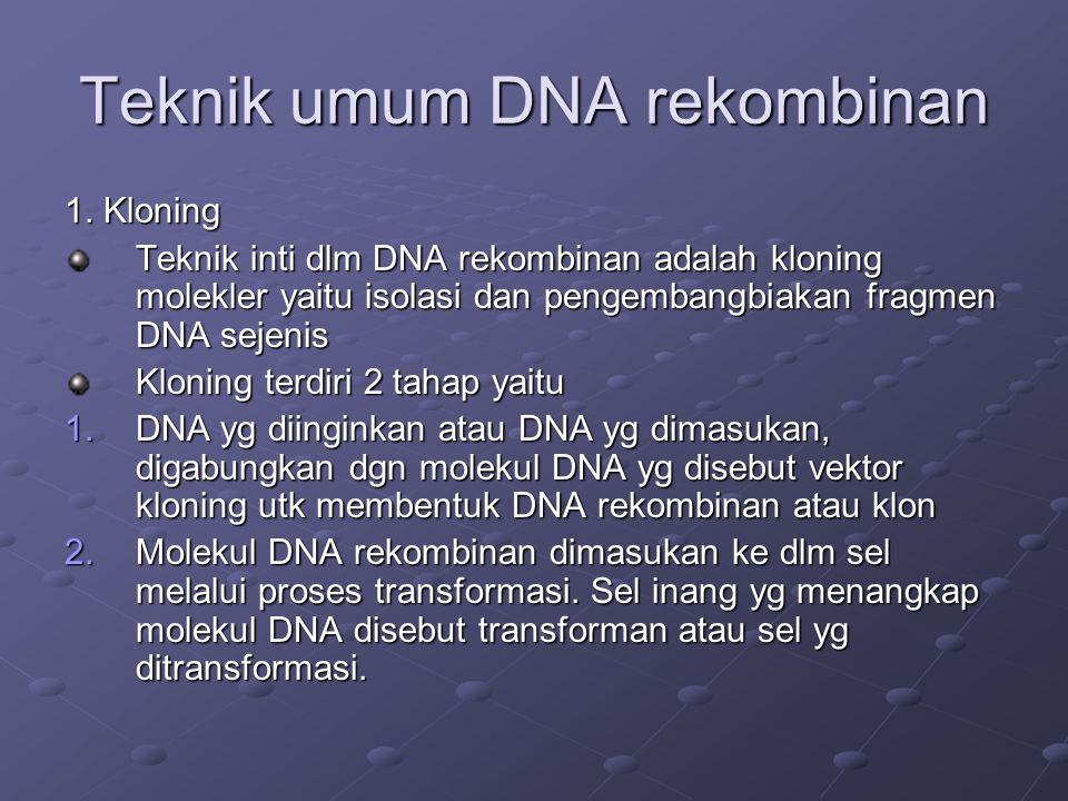 Teknik umum DNA rekombinan