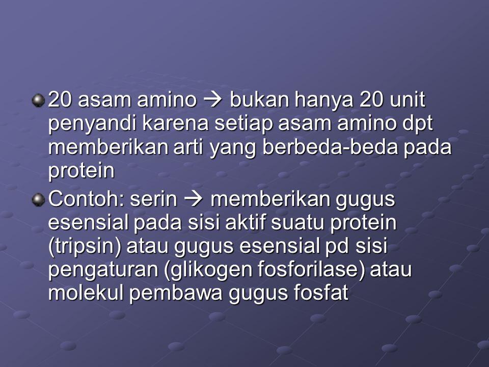 20 asam amino  bukan hanya 20 unit penyandi karena setiap asam amino dpt memberikan arti yang berbeda-beda pada protein