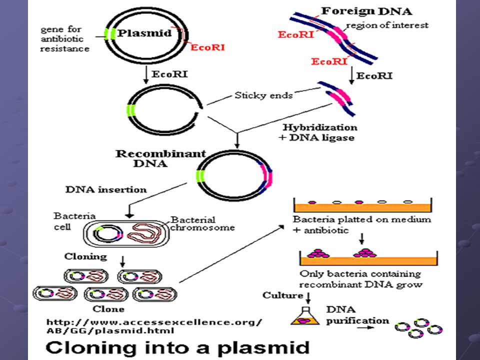 Figure: Cloning a Restriction Fragment into a Plasmid