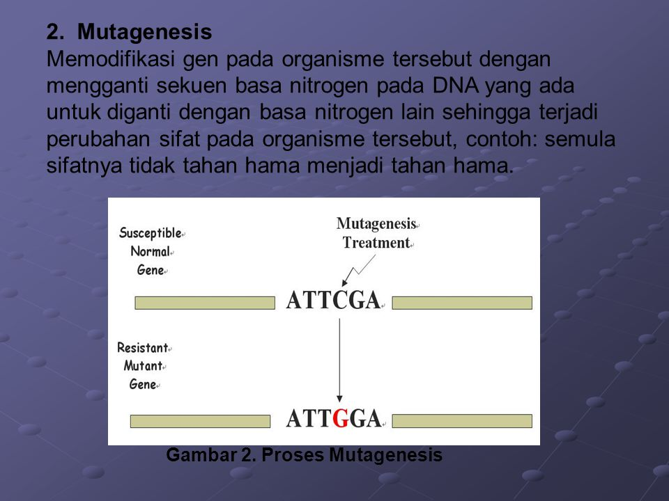 Gambar 2. Proses Mutagenesis