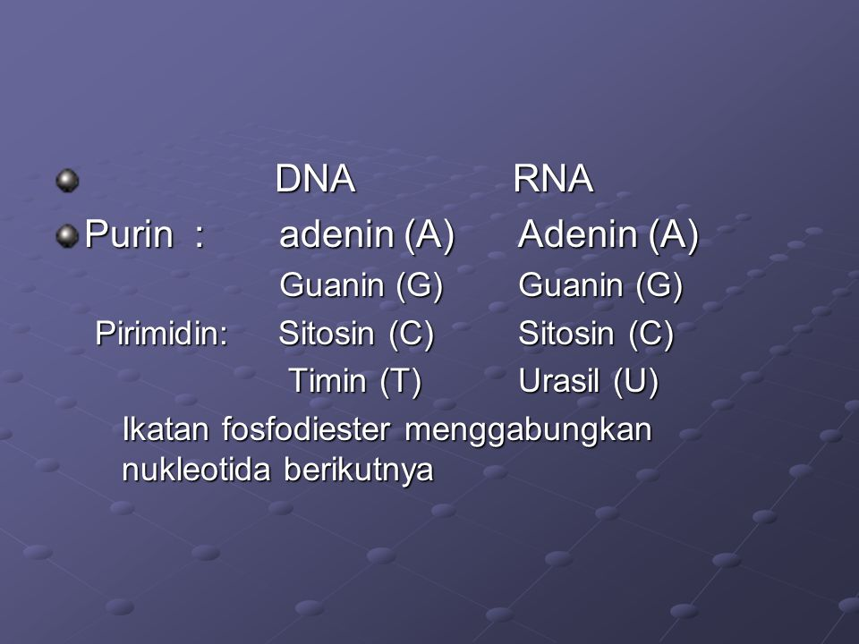 Purin : adenin (A) Adenin (A)