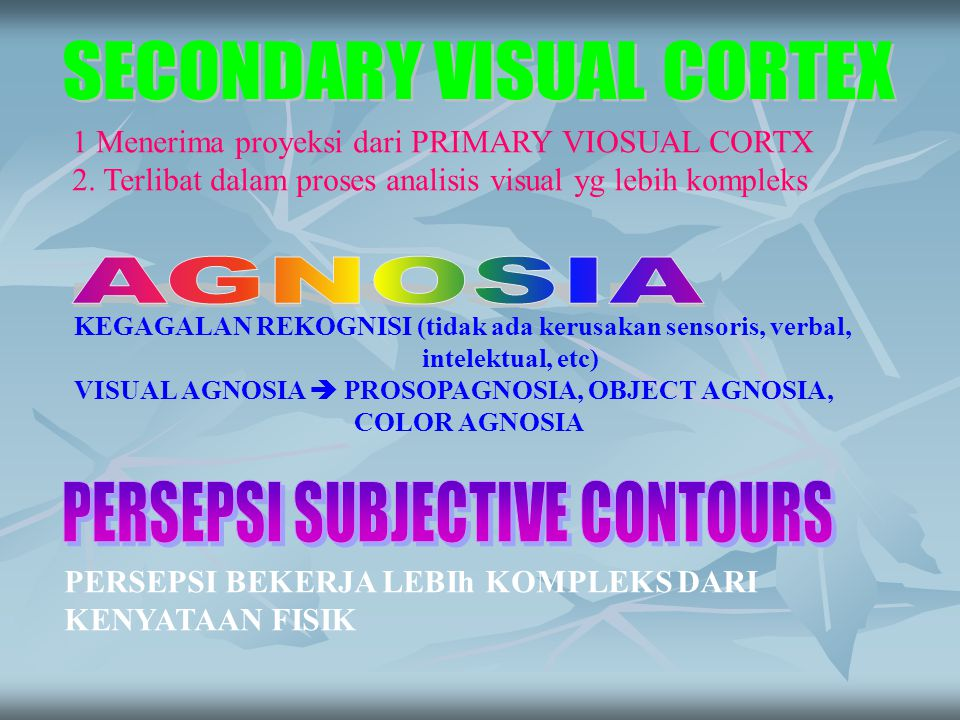 SECONDARY VISUAL CORTEX