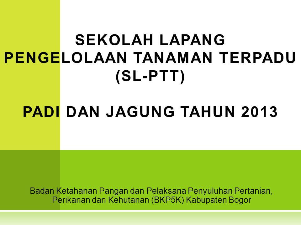 SEKOLAH LAPANG PENGELOLAAN TANAMAN TERPADU (SL-PTT) PADI DAN JAGUNG TAHUN 2013
