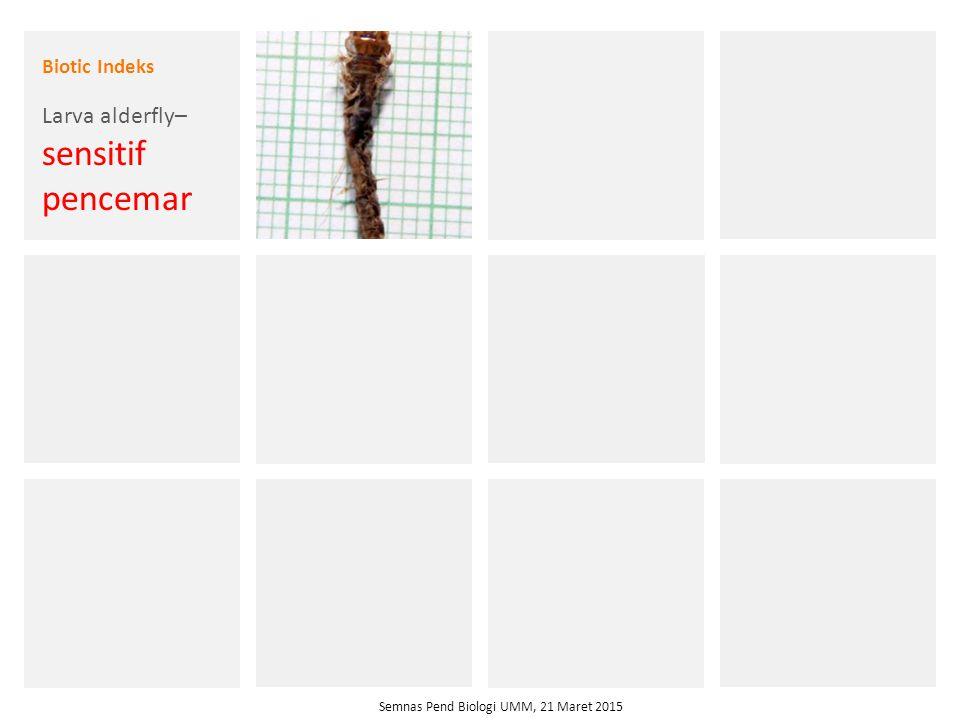 Larva alderfly– sensitif pencemar
