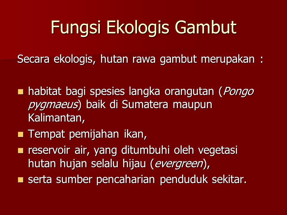 Fungsi Ekologis Gambut