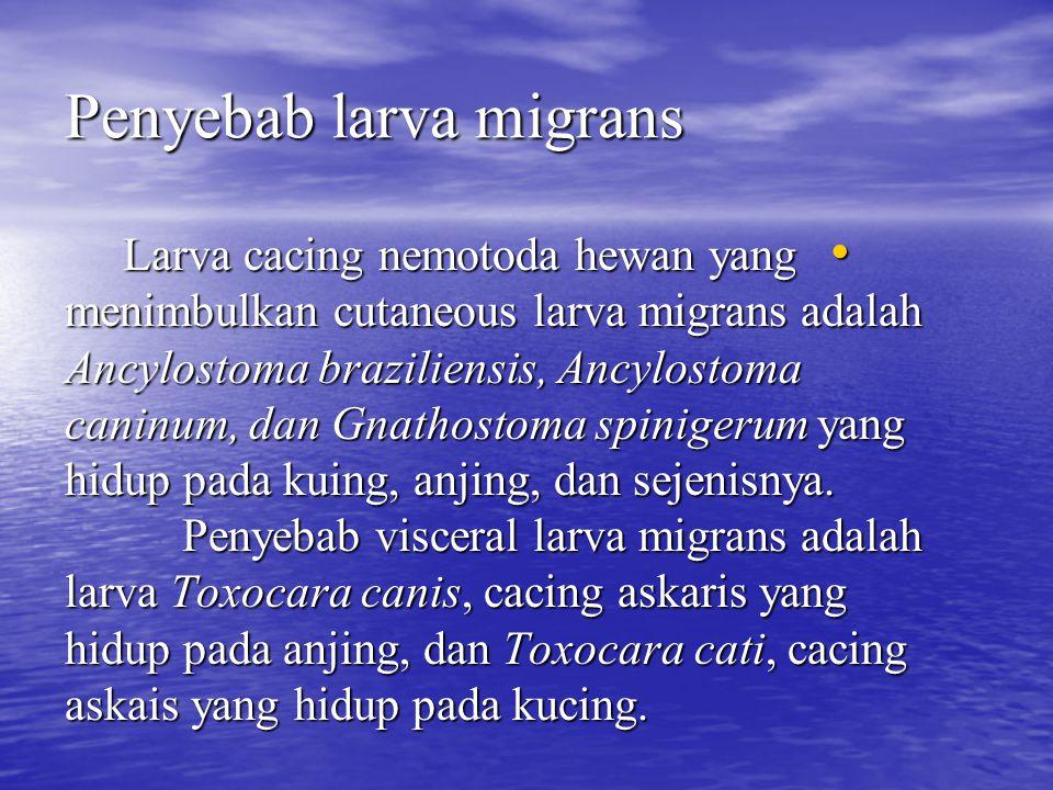 Penyebab larva migrans